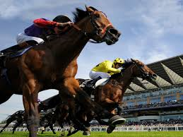 Horse betting system basics for you